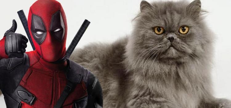 Deadpool salvando Gatinho!