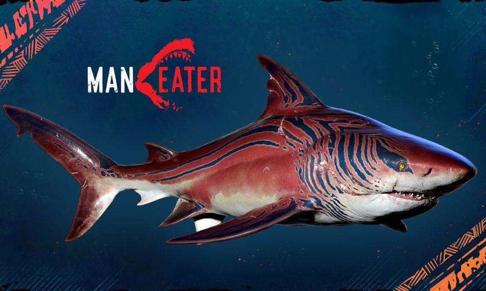 Nadando com os Tubarões! Todos os Jogadores de Maneater Receberão a Adaptação do Tubarão-Tigre Esta Semana Gratuitamente…