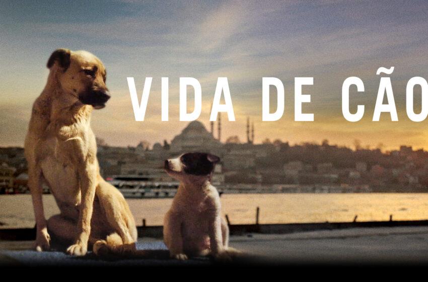 Crítica: 'Vida de Cão'